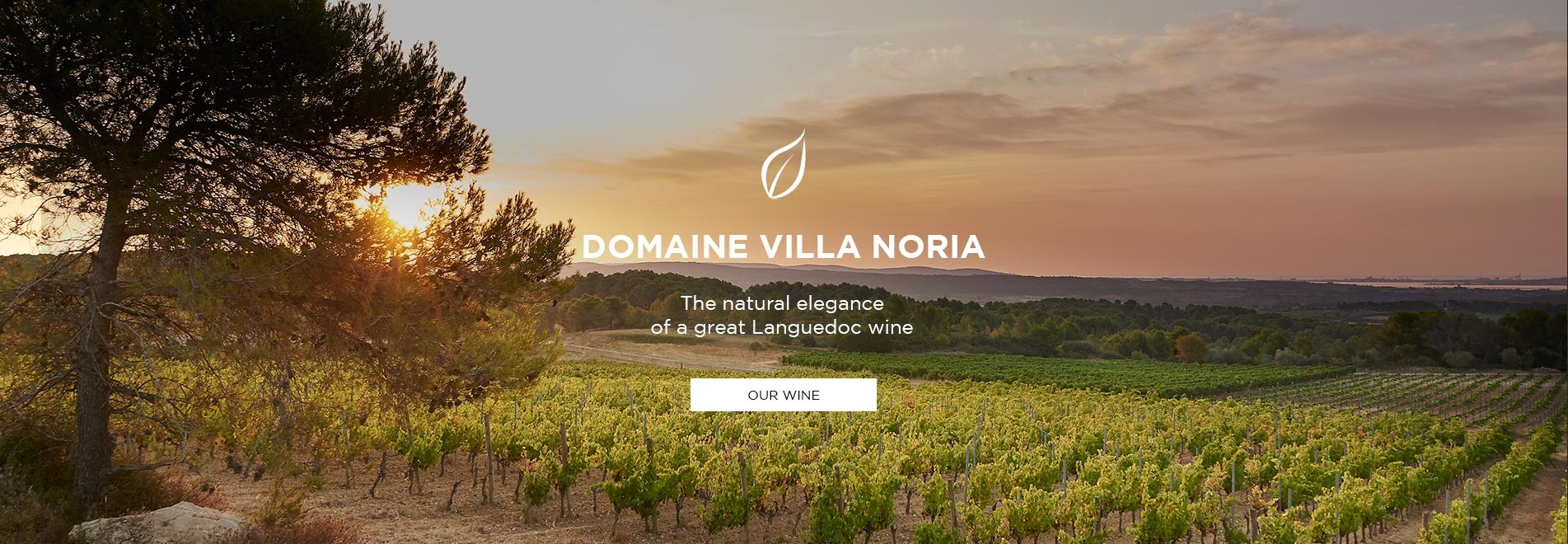 Winery Languedoc
